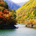 Photos: 「梓川渓谷の紅葉」