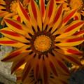 Photos: 公園花