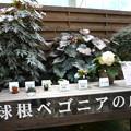 観光植物園