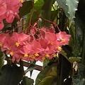 色々と咲いている花公園