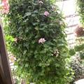 花の一コマ4768