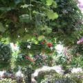 4794植物園