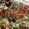 観光地の花園