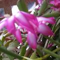 花畑のハウスの中