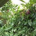 花壇に花が