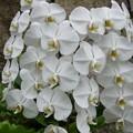 観光地の花