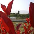 Photos: 春と塔