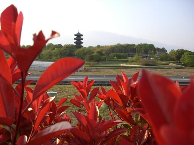 Photos: 吉備路の春