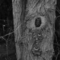 Photos: 木の模様