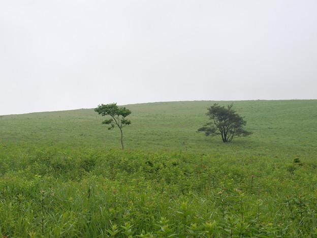 2本の木(美ヶ原)