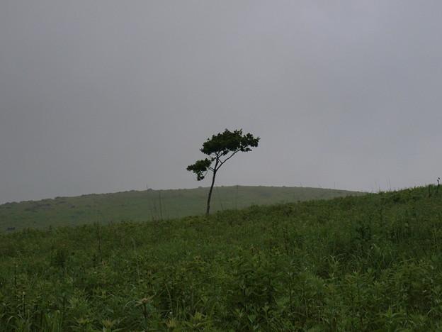 1本の木(美ヶ原)