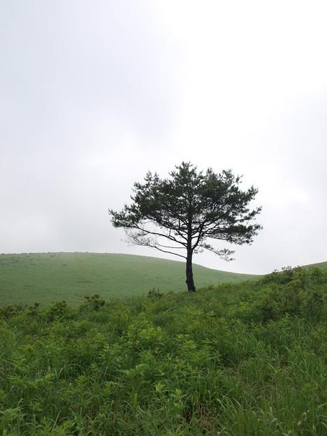 一本の木(美ヶ原)