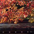 Photos: Autumn Leaves
