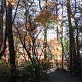 Photos: 紅葉の道
