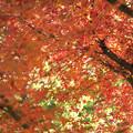 いつかの紅葉