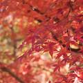 Photos: いつかの紅葉