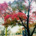 Photos: 都会の公園