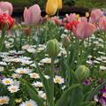 写真: 盛春