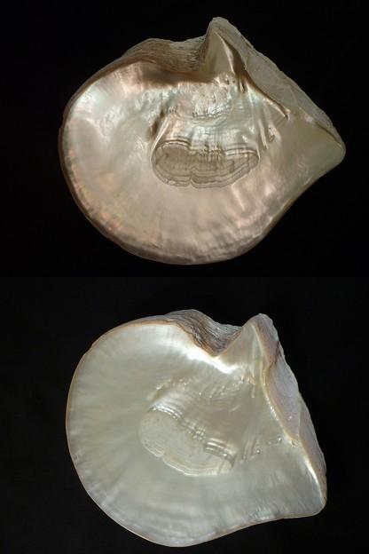 P1030497a