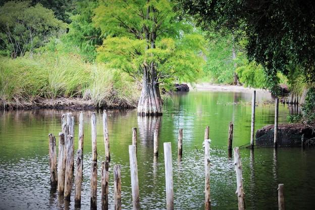 湖に立つ木