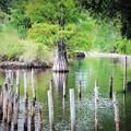 写真: 湖に立つ木