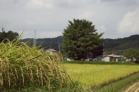 小湊鉄道 02