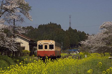 小湊鉄道の桜 08