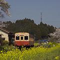 写真: 小湊鉄道の桜 08