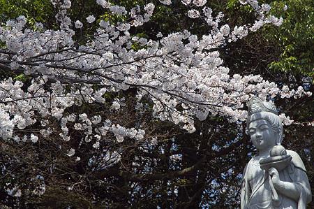 東戸塚の桜 19