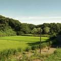 写真: 舞岡公園03 水田