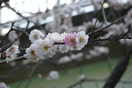春の肥田牧場 04