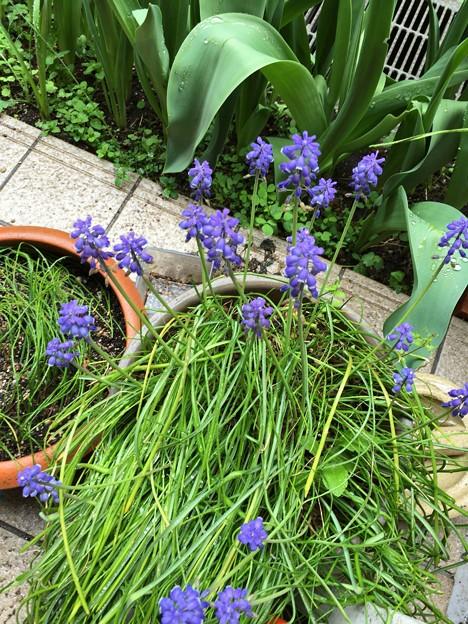 写真: わが家の庭