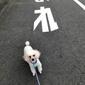 Photos: モフ太さんぽ