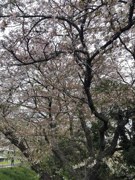 春のさんぽ