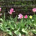 Photos: 初夏の庭