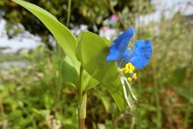 野の花^0^