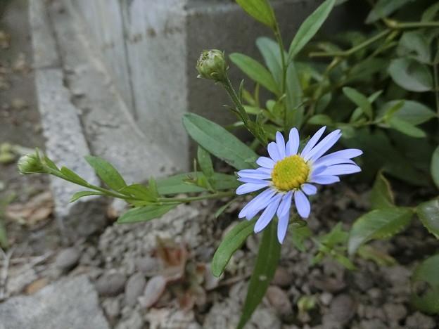 これは~野の花^0^