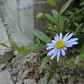 写真: これは~野の花^0^
