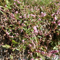 Photos: これは~^0^∥野草。。。