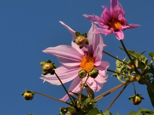 Photos: これは~^0^∥花♪
