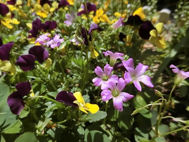 野の花♪♪