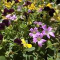 Photos: 野の花♪♪