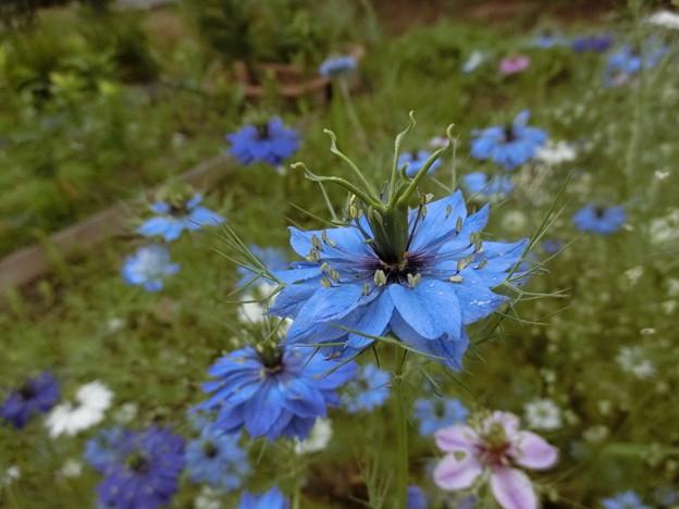 ここは~花&野の花♪
