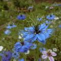 Photos: ここは~花&野の花♪