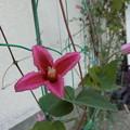 Photos: これは~^0^♪花♪