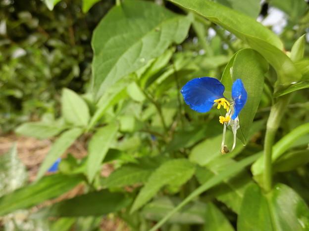 野の花~♪