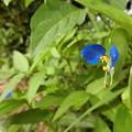 Photos: 野の花~♪