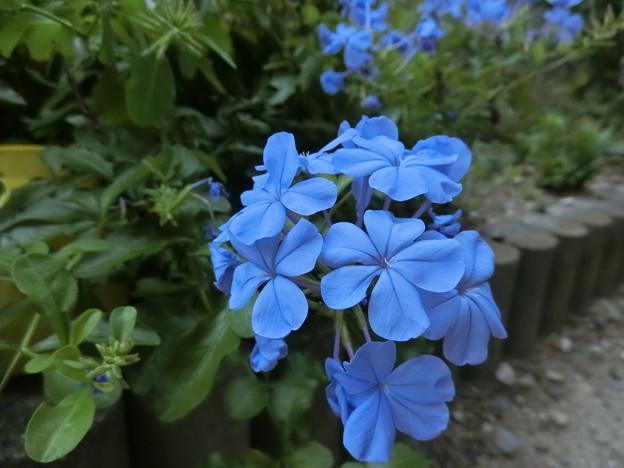 Photos: よく咲きますね~♪