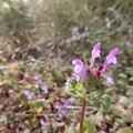 Photos: これは~^0^野の花♪