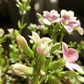 Photos: 小花。。。